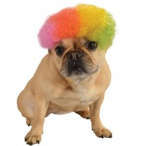 Afro Pet Wig Rainbow - Small
